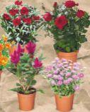 Blütenpflanzen Mix