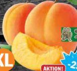 Aprikosen von Domaine Bayard