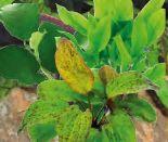Wasserpflanzen XXL von Dennerle