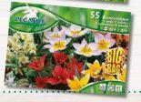 BigBag Tulipa Bienen-Tulpen Mix von Pegasus