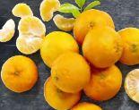 Clementinen von Real Quality