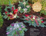 Große Grabschale von Garden Feelings