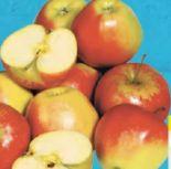 Tafeläpfel Braeburn von Gut & Günstig