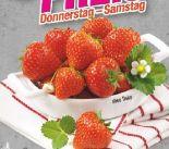 Erdbeeren von Driscoll's