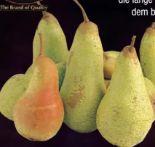 Tafelbirnen Abate von Julius Fruit