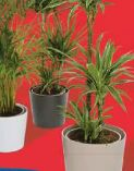 Grünpflanzen-Mix von Gartenkrone