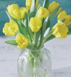 Schnittblumen Tulpen