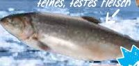 Saiblinge von Braun Fischfarm