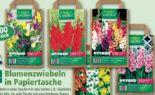 Blumenzwiebeln in Papiertasche von Finest Garden