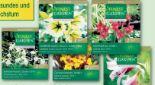 Raritäten Frühjahrsblumenzwiebeln von Finest Garden