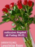 Langstielige Rosen von Garden Feelings