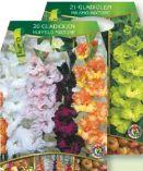 Gladiolen Blumenzwiebelmischung