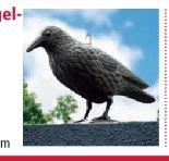 Tauben-/Vogelabwehr Rabe von Gardigo