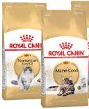 Feline Breed Nutrition von Royal Canin