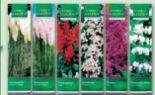 Kübelpflanzen Besonderheit von Finest Garden
