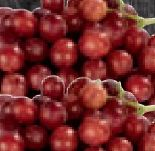 Tafeltrauben Crimson