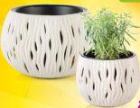 Blumentopf Sandy Bowl