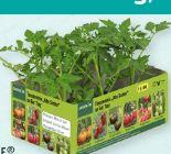 Tomatenmix Alte Sorten von Gardenline