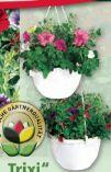 Ampelpflanzen Trixi