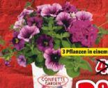 Confetti Garden Trio