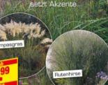 Sommer-Gräser von Gartenkrone
