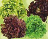 Bunte Salate von Unsere Heimat