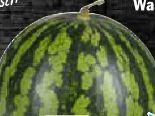 Mini Wassermelone von Gourmet Hit