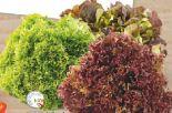 Bunte Land-Salate von Edeka Mein Land