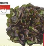 Kopfsalat von Franken