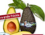 Avocado Hass von SanLucar