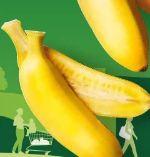Fairtrade-Baby-Bananen