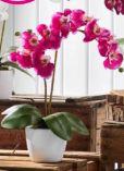 Kunstpflanze Phalänopsis
