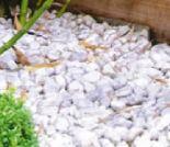 Marmorkies von Mr. Gardener