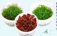 Grow Wasserpflanzen von Dehner Aqua