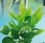 Topfpflanzen von Dennerle