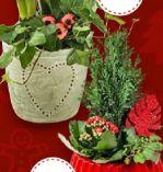 Bepflanzte Weihnachtsgefäße
