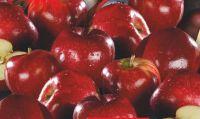 Tafeläpfel Red Jonaprince von Bauers Beste