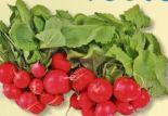 Radieschen von Reichenau Gemüse