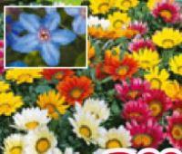 Blühpflanzen Mix