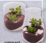 Sukkulente von Gardenline