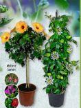 Balkonpflanzen von Gardenline