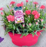 Muttertagspflanzen von Gardenline