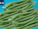 Grüne Bobby Bohnen von Edeka