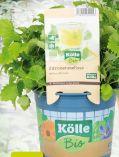 Bio Gartenkräuter von Kölle's Bio