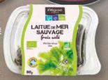 Laitue De Mer Sauvage Frais Sale von Algae