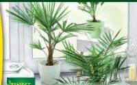 Palme von Finest Garden