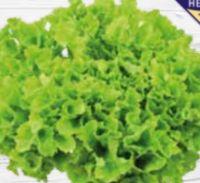 Mini Salatherzen Sala Crisp von Unsere Heimat