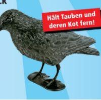 Taubenschreck Rabe