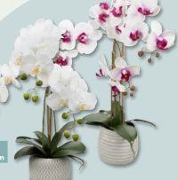 Naturtreue Orchidee von Living Art