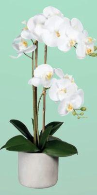 Kunstpflanze Phalenopsis